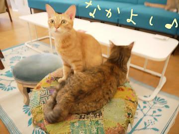 20120730_hasegawa_06.jpg