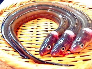 20120725_okuda_05.jpg