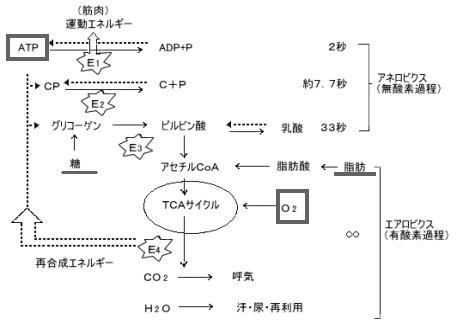20120321_shibata_01.jpg