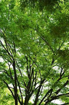 20120224_soi_01.jpg